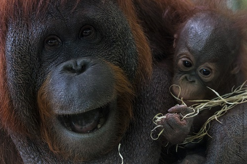 Palm Oil: The Hidden Ingredient with Huge Impact (And 4 Reasons to Delete It from Your Diet)