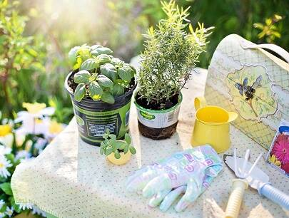 5 Herbs You Should Plant This Spring!