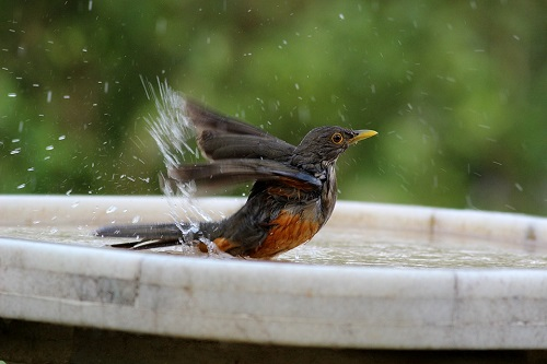 As We Begin To Experience More Extreme Temperatures Particularly Periods Of High Heat And Drought The Animals Birds That Overlap Our Outdoor Living