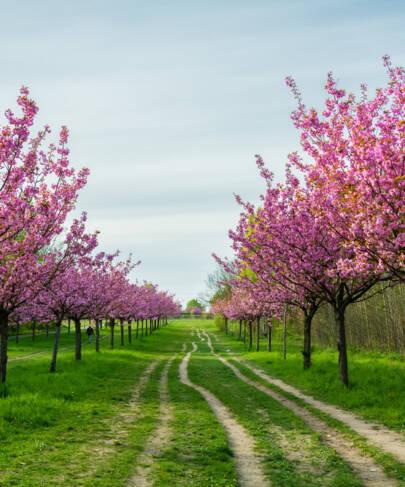 The Spirit of Renewal: Spring and TCM